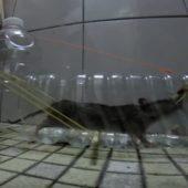 Ловушка мышей из пластиковой бутылки