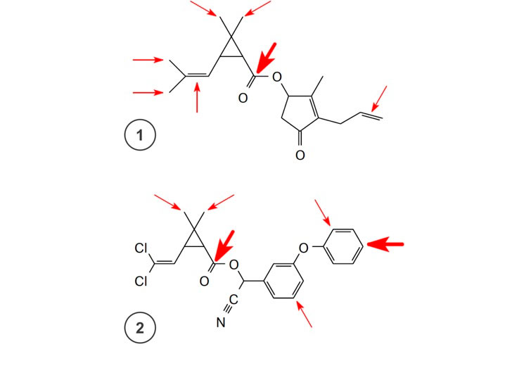 Атака ферментов на пиретроиды