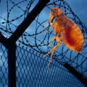 Барьерная защита от клопов и тараканов