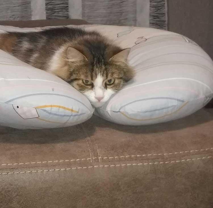 Запах кошачьей мочи на диване