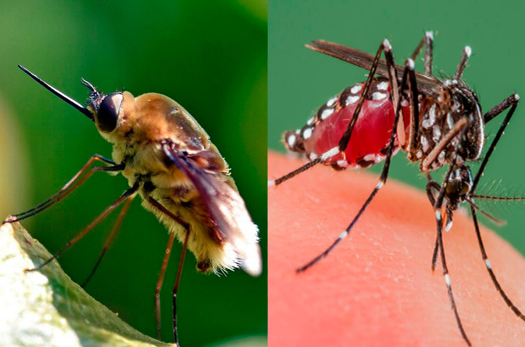 Тривиальная муха и москит