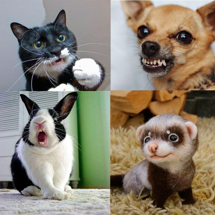 Собака, кот, кролик, хорек