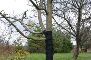 защита дерева капроном
