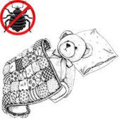 Живут ли клопы в одеялах, подушках и в мягких игрушках