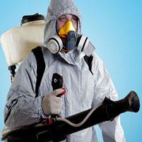 Служба уничтожения насекомых в квартире. Дезинсекция помещений.