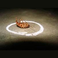 """Помогает ли мелок """"Машенька"""" от клопов? Отзывы об эффективности средства. Мелок «Машенька» от тараканов, клопов и других насекомых"""