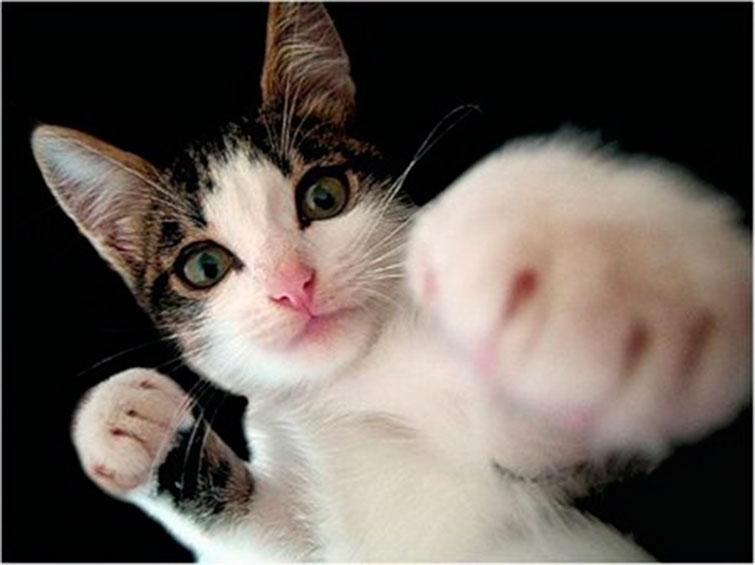 Кот предлагает выяснить отношения с грызуном в боксерском поединке