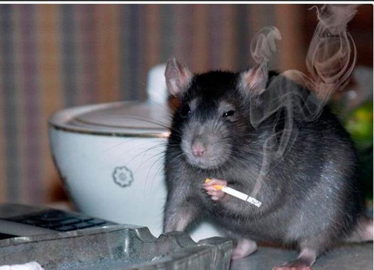 Крыса в депрессии после просмотра этой статьи