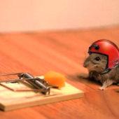 Народные средства от мышей и крыс для самостоятельной борьбы с грызунами