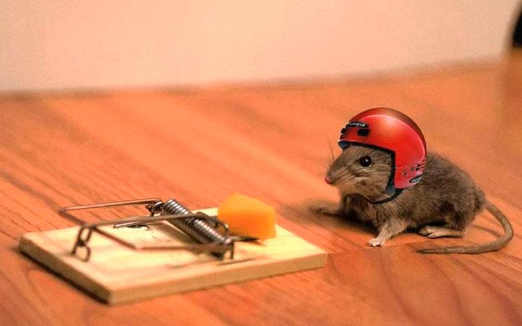 Грызунофф от крыс и мышей как пользоваться