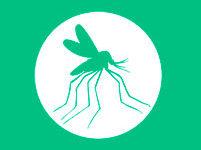 «Биом» - служба уничтожения насекомых и грызунов в Саратове