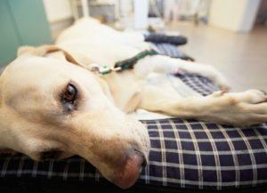 Признаки токсического поражения у собак