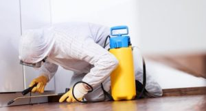 Санобработка помещения от клопов