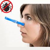 Как избавиться от запаха после травли клопов в квартире