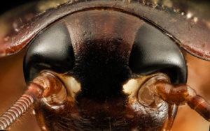 Усы таракана