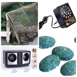Методы борьбы с крысами