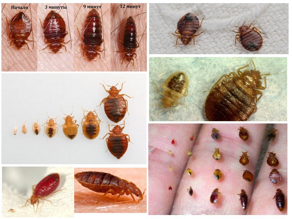 время узнать все виды домашних насекомых в картинках лицо выглядело