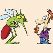 Как выбрать эфирное масло от комаров - выбираем эффективное средство на лето