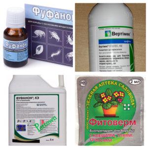 Химическая обработка — ведущий метод борьбы и защиты от галлового клеща