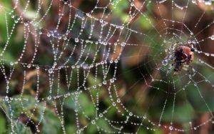 Зачем пауку нужна паутина