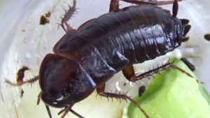Как перекрыть тараканам доступ в дом