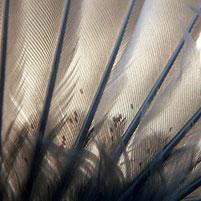 Подушечный клещ (перьевой) - Вредители