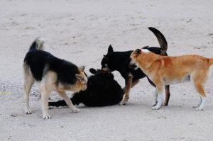 Уличные собаки