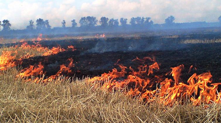 Пал травы, выжигание поля