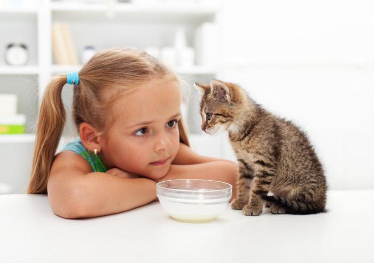 Контакт с домашними животными