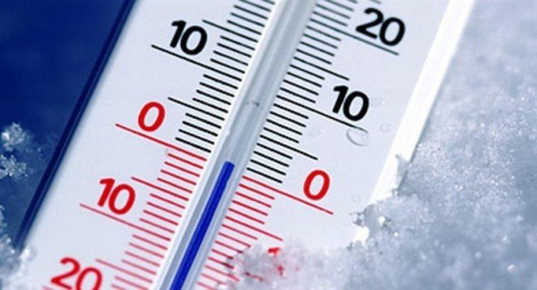 При какой температуре гибнут блохи
