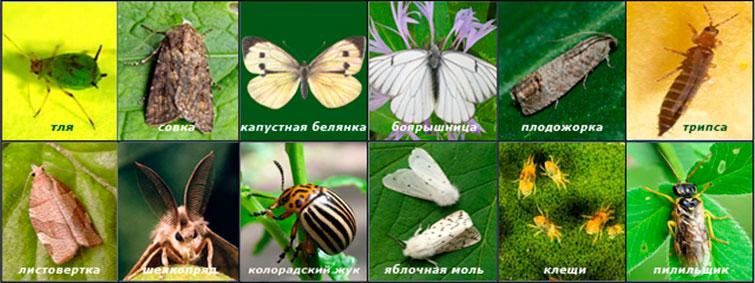 Против каких насекомых применим