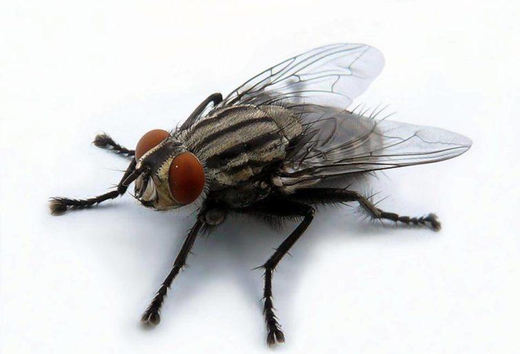 Эффективные средства от мух на улице