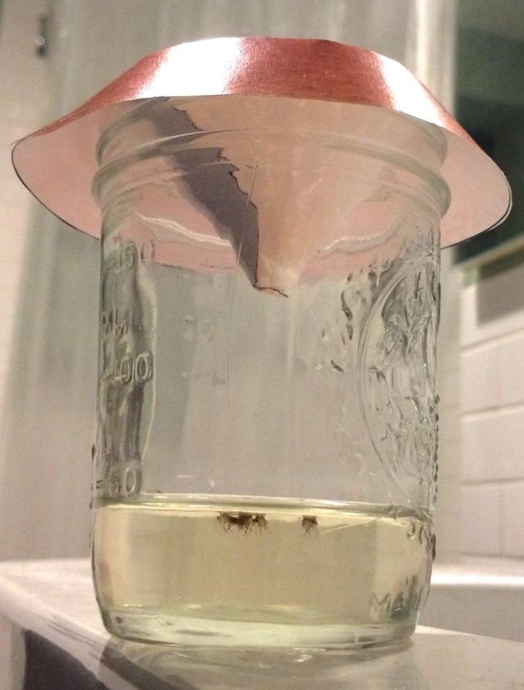 Ловушка для мух из банки с использованием сахарного раствора