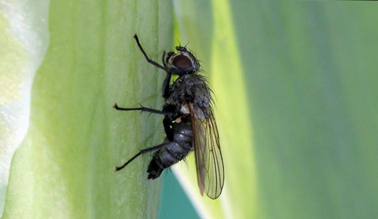 Как выглядит насекомое