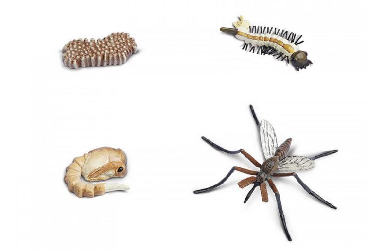 Жизненный цикл комаров
