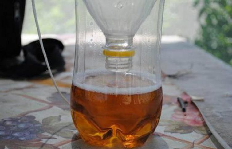 Ловушка для мух из пивной бутылки