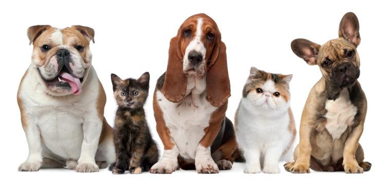 Собаки и коты против кротов