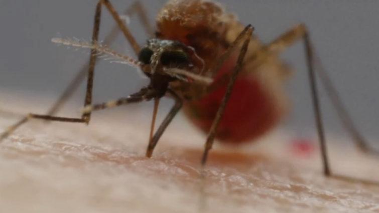 Почему комары любят первую группу крови