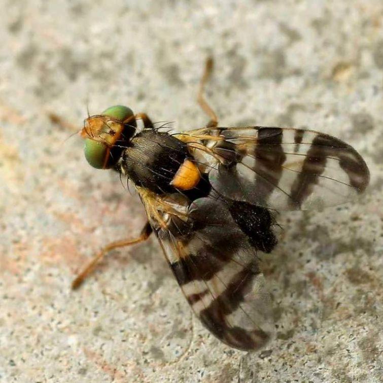 Какой вред приносит насекомое