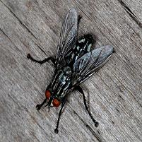 Откуда лезут мухи в дом