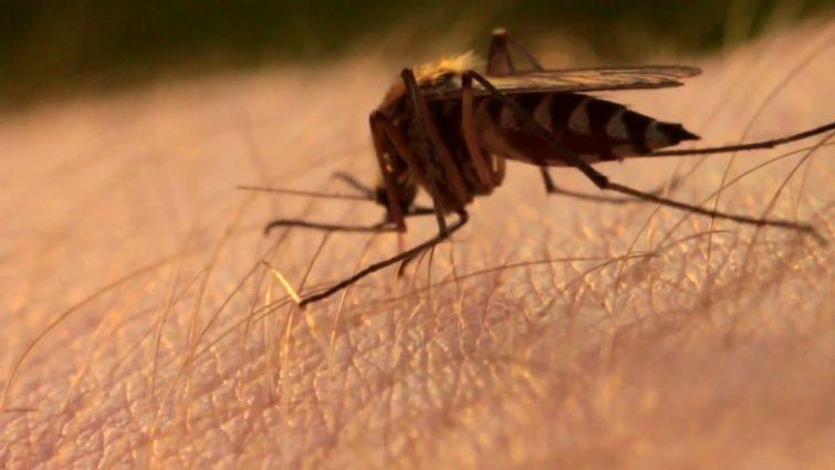 Какую группу крови предпочитают комары