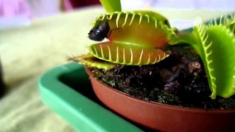 Зачем растения едят животную пищу
