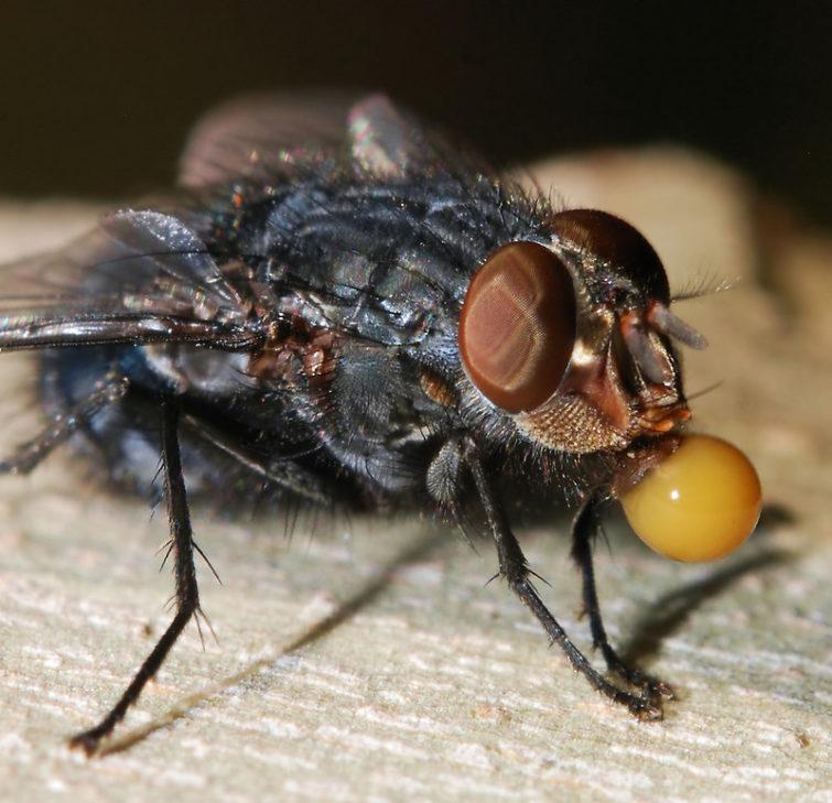 Откуда появляются мухи зимой