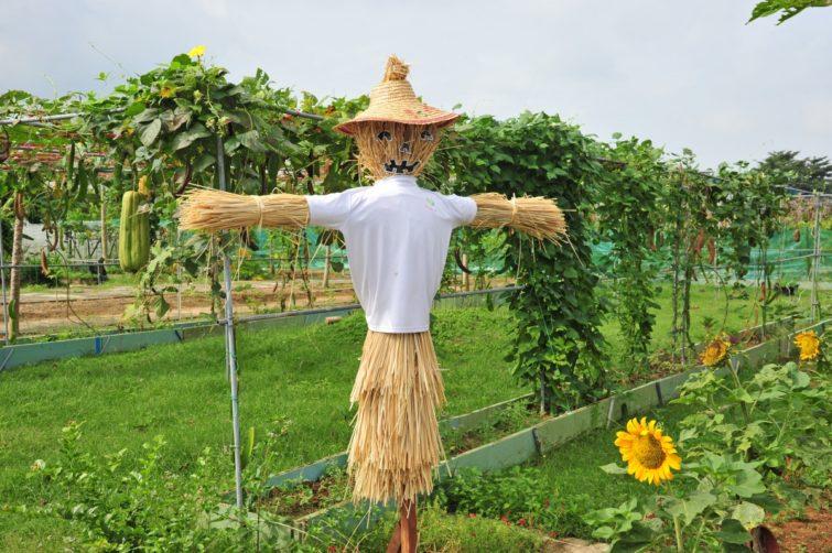Пугало, на огороде (вариант внешнего вида)