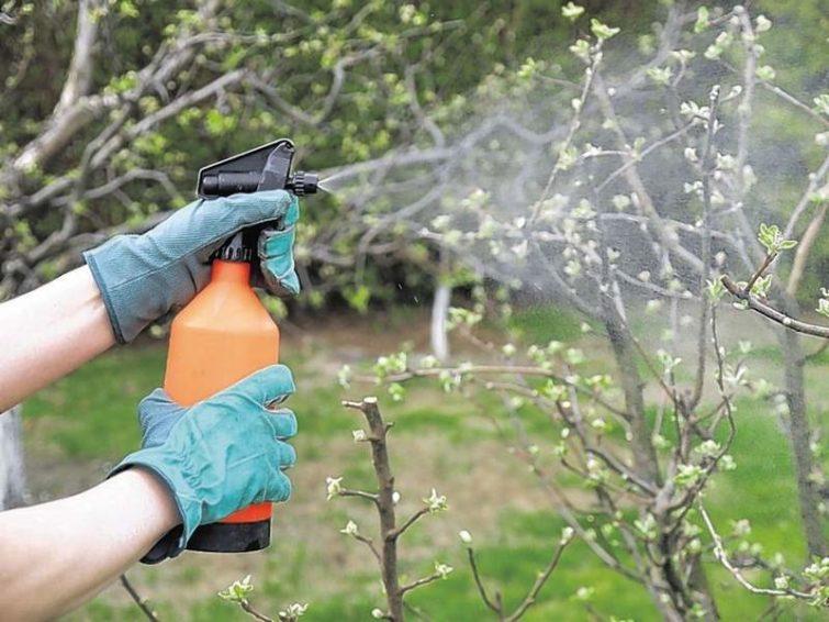 Удобрение весной деревьев и кустарников