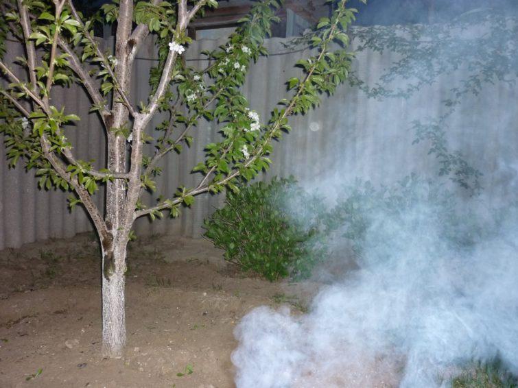 Как окуривать деревья