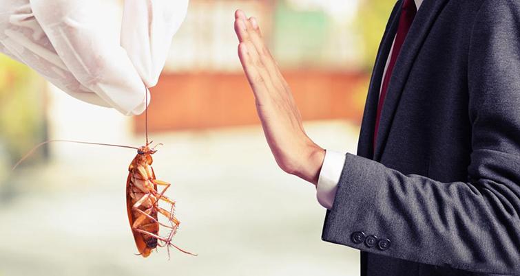 Боязнь тараканов или блаттофобия
