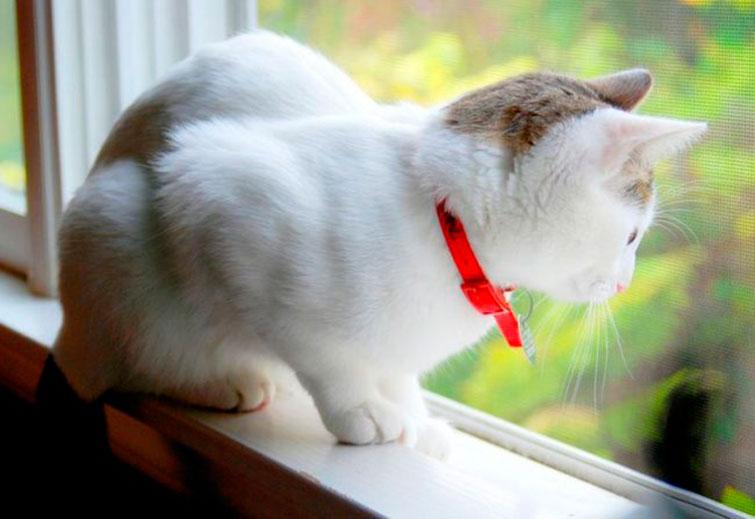 Ошейник для котов