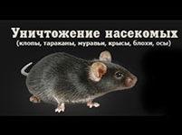 """ООО """"Успех"""" - уничтожение вредителей в Санкт-Петербурге"""