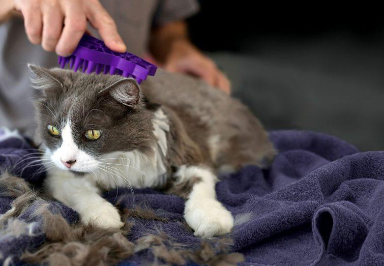 Регулярное вычёсывание